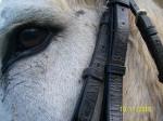 Topsy - Esel (11 Jahre)