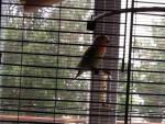 SenzaNome - Papagei