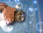 Tara - Schildkröte (3 Jahre)